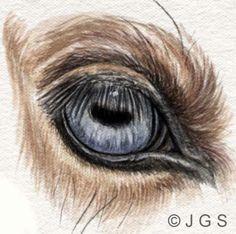 Draw and Paint Horses' Eyes: Wall Eyed Horses