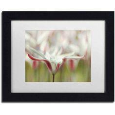 Trademark Fine Art 'Tulipa Clusiana Cashmeriana' Canvas Art by Cora Niele, White Matte, Black Frame, Size: 11 x 14, Multicolor