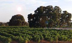 Bodega Rodríguez de Vera, visita una bodega en D.O. Almansa. Una bodega seleccionada por Enoturis. www.enoturis.com. #Enoturismo  #winetourism #winetravel #oenotourisme