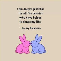 More galleries of house bunny quotes. House Rabbit, Pet Rabbit, Funny Bunnies, Cute Bunny, Lana Banana, New Zealand Rabbits, Bunny Quotes, Somebunny Loves You, Watership Down