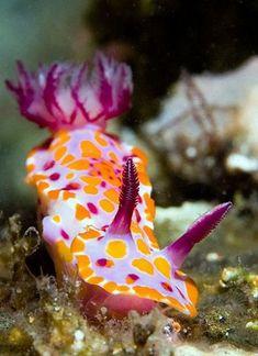 nudibranch... | Just Keep swimming