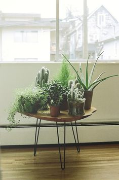 """A table of plants ALWAYS makes a living space feel like """"home"""". Cacti and succulents are very hardy and need only a little water and sunlight. SUPER easy."""