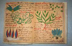 herbarius n5