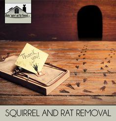 Rodent Removal Services in Atlanta, Georgia  http://www.atlantasquirrel.com/