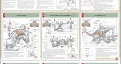 Strength-Training-For-The-Chest-Chart