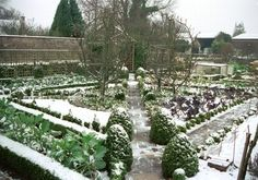 potager in snow..