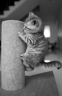You can do it tiny kitten!