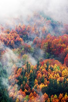 touchdisky:  Otoño by Mimadeo  aerial view of forest in autumn with fog and vivid colors