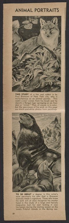 Citation: Clipping about Paul Bransom, Paul Bransom papers, Archives of American Art, Smithsonian Institution. Archives Of American Art, Animal Portraits, Foxes, Illustrators, Art Decor, Illustration Art, Van, Gallery, Paper