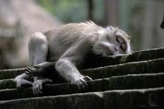 Monkey forest in Ubud, don't be fooled! Hold on to your sunglasses, throw the bananas and run!
