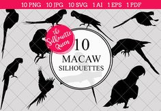 Macaw Silhouette Vector Graphics includes PNG files with transparent backgrounds at The PNGs are approximately 10 inches at it's widest point. Silhouette Clip Art, Black Silhouette, Tree Silhouette, Silhouette Studio, Free Graphics, Vector Graphics, Bird Of Paradise Wedding, Animal Cutouts, Wedding Crafts