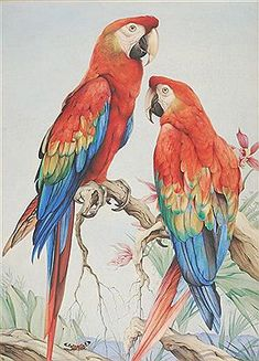 Edward Detmold - Artist, Fine Art Prices, Auction Records for Edward Detmold Birds Painting, Animal Art, Fine Art, Art Pricing, Macaw Art, Bird Drawings, Animal Paintings, Watercolor Bird, Bird Illustration