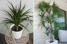 Tipos de plantas para cultivar dentro de casa