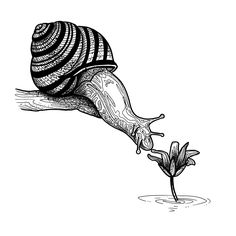 #snail #flower #black and white #illustration #drawing #art #tattoo #design