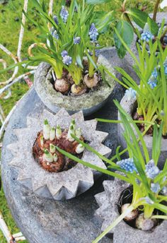 These easy to make DIY concrete planters are perfect for planting flowers and vegetables! This cheap project uses only a few supplies to make unique planters that are quite durable. Let your plants add color to these concrete planters! Diy Concrete Planters, Concrete Projects, Concrete Garden, Outdoor Planters, Diy Planters, Garden Planters, Outdoor Gardens, Planter Ideas, Balcony Garden
