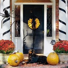 Love the mini pumpkin wreath...For a Halloween decoration that will bring seasonal color to your front door, attach some miniature pumpkins to a plastic foam wreath. It's easy to do: Just wire the tiny pumpkins to the wreath form, and use sheet moss to fill in the spaces between them. Then cap the wreath with a big black bow, and hang it on the front door.