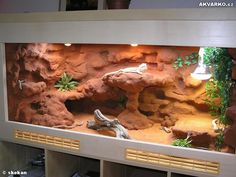 Bearded Dragon Vivarium, Bearded Dragon Enclosure, Bearded Dragon Terrarium, Bearded Dragon Habitat, Bearded Dragon Cage, Reptile Cage, Reptile Habitat, Reptile Enclosure, Terrariums Gecko