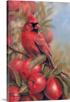 Red on Red Wall Art, Canvas Prints, Framed Prints, Wall Peels Red Wall Art, Wall Art Prints, Framed Prints, Canvas Prints, Pretty Birds, Beautiful Birds, Cardinal Birds, Bird Pictures, Cardinal Pictures