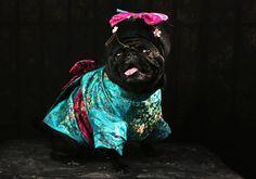 Tompkins Square Park Halloween Dog Parade 2012 Costumes | POPSUGAR Pets