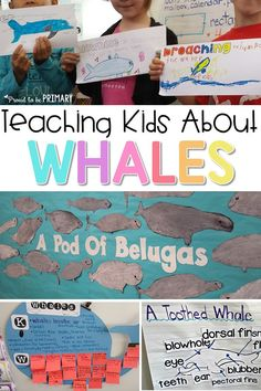 Teach children about whales in the classroom with these classroom lesson ideas, including a beluga directed drawing, whale vocabulary, and science and early literacy lessons. #whales #scienceforkids #whalestudy #whalescience