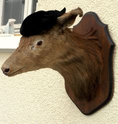 HUGE Antique taxidermy Deer stag Head from France