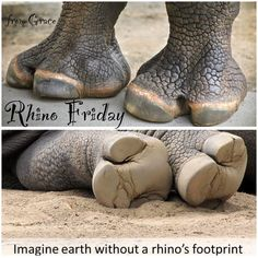 Rhino Friday - let their footprints be around forever ! Pet Tiger, Tiger Cubs, Bear Cubs, Bengal Tiger, African Elephant, African Animals, Zoo Animals, Animals And Pets, Wild Animals