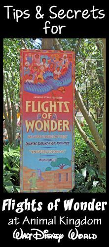 Everything you need to know about Flights of Wonder. Pin now and reference on your next Disney trip. disney animal kingdom #disney