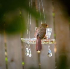 16 pics here with directions....Teacup Hanging Feeders. How fun to do with the whole family for a bird study.