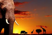 Elephant & Sunset wall paper, reminds me of my safari a few years ago Tier Wallpaper, Animal Wallpaper, African Elephant, African Safari, Horse Wall Decals, Wall Murals, Wall Art, Photo Mural, Funny Animal Photos