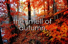 my favorite time of year...the smells, the color, the crisp air...makes you feel alive