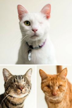 It can be incredibly difficult for blind or partially sighted cats to get adopted. One photographer is doing her part to show everyone just how adorable blind cats can be, in an effort to get more visually impaired cats adopted.
