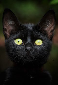 Green-Eyed Cat By Mateusz Wojton