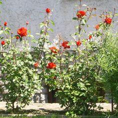 Okrasné rostliny Plants, Plant, Planets