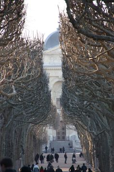 Path of Trees to the Natural History Museum, Paris