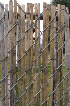 Bamboo & chain link fence
