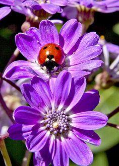 Little Ladybug by Patricia Sanders