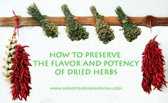 How To Preserve The Flavor and Potency Of Dried Herbs! More info here: http://homesteadingsurvival.com/how-to-preserve-the-flavor-and-potency-of-dried-herbs/