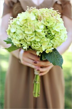 Gorgeous green hydrangea are stunning in this bridesmaid bouquet! Hydrangea are great focal flowers that boast a soft, large bloom - perfect for bouquets and other wedding flowers! Shop hydrangea (in a variety of beautiful colors!) year-round at GrowersBox.com!