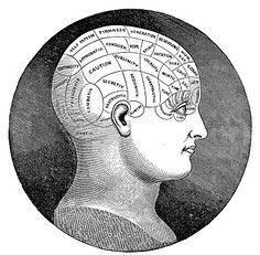 Vintage Clip Art - Antique Phrenology Head - The Graphics Fairy