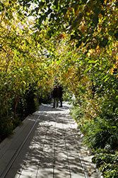 New York City - The High Line is open daily from 7:00 AM to 11:00 PM, plan your visit here.
