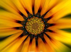 Sun Flower Face - loveyourpix.com
