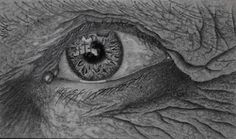 Pencil drawing by REKnox