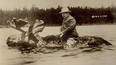 Despite his exciting persona, this is one thing that TR never did: ride a swimming moose. #history #historicalfacts