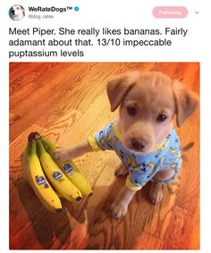Cute We Rate Dogs Twitter Dump - 1