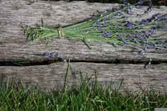 How to dry fresh lavender from the garden... Mmm the scent!