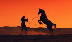 Makes me think of Man from Snowy River, LOVED that movie! Man From Snowy River, Arabian Beauty, Movies Showing, Panther, Egypt, Horses, Painting, Animals, Beautiful