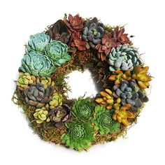 A Dot & Bo exclusive, this hand-assembled succulent wreath can't be found anywhere else. Adorned with luscious, subtly textured, water-saving succulents in chalky smooth purples, grays, and greens with...  Find the Colorful Succulents Wreath, as seen in the Rustic Fall Gathering Collection at http://dotandbo.com/collections/rustic-fall-gathering?utm_source=pinterest&utm_medium=organic&db_sku=FPC0004