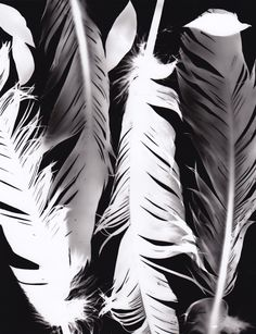 Texture and feel of the feathers - experiences of the bird it came from