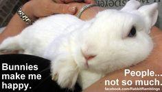 Bunnies+make+me+happy+Ethel+arm+candy+snuggle028.JPG 1,600×920 pixels