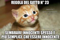 i love youz. Italian Memes, Kinds Of Cats, Super Cat, Cute Cats And Dogs, Happy Thursday, Cat Art, Dog Cat, Cute Animals, Kitty
